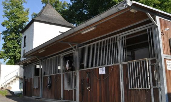 Pferdebox/Außenbox des Kornspringer Reitstall