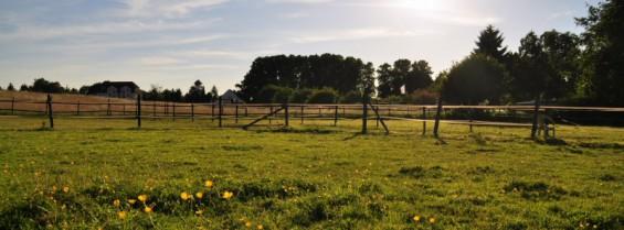 Ansicht der Weidenflächen für die Pferde des Kornspringer Reitstalls